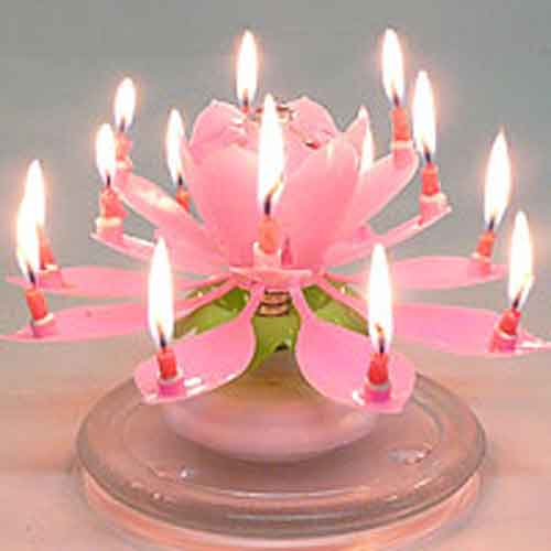 amazing musical flower birthday candle